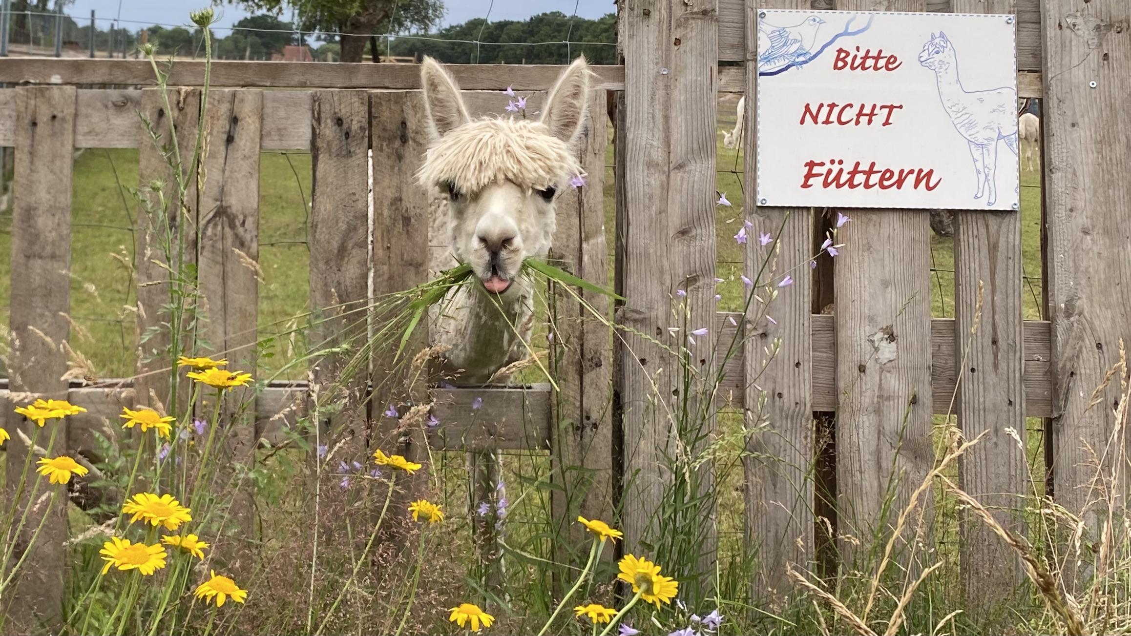 Yoga Feel-Good Volksdorf Ahrensburg Entspannung Achtsamkeit Alpakas