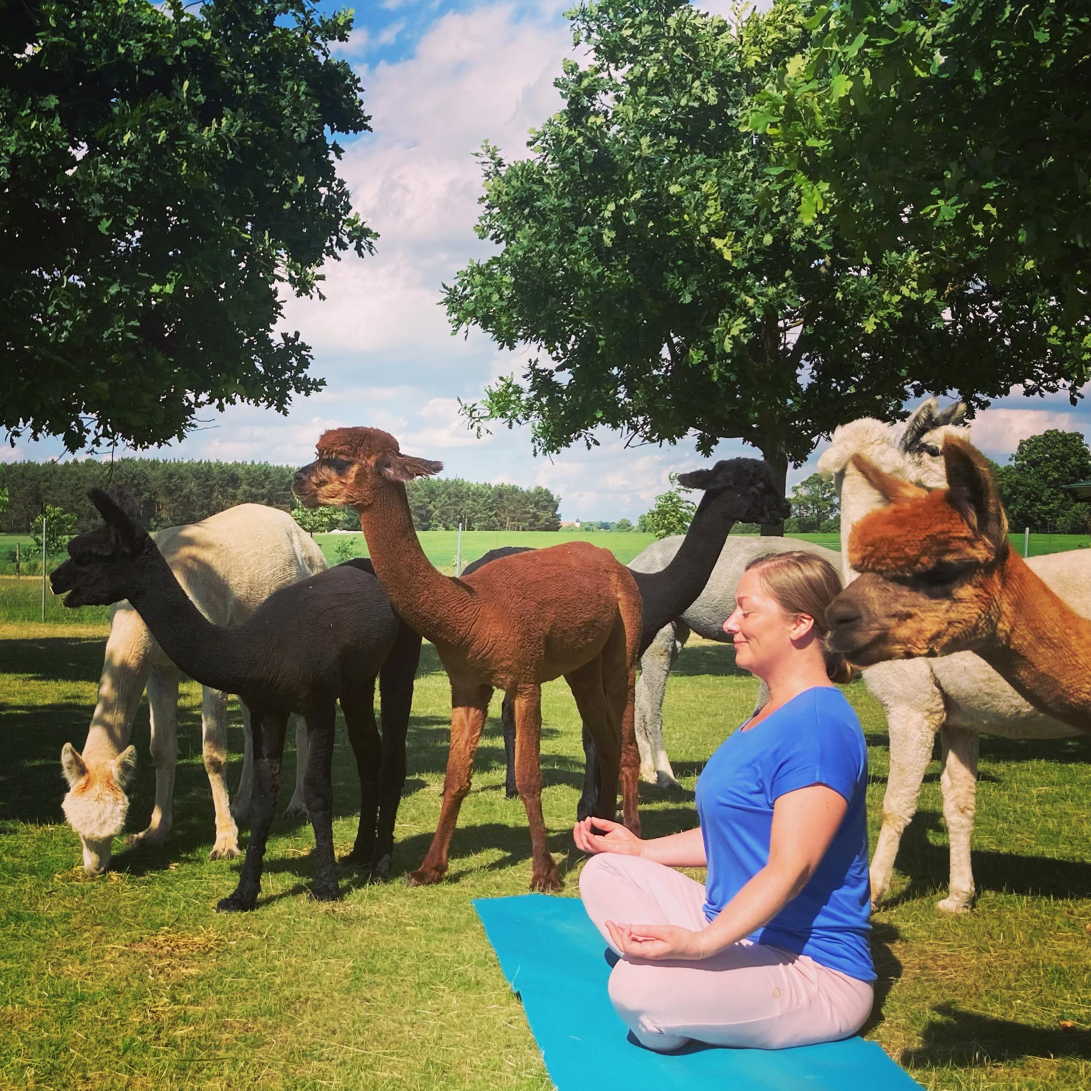 Yin Yoga mit Alpakas Feel Good mit Bianca Pagel